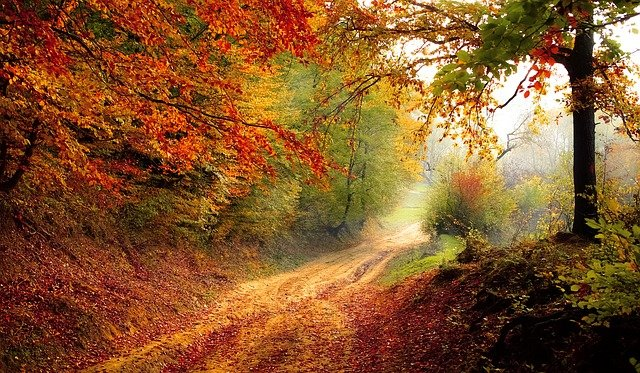 Road Forest Fall