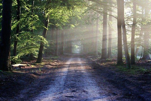 The Road Beams Path
